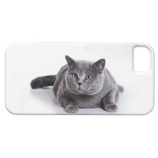 Grey Cat Case For The iPhone 5