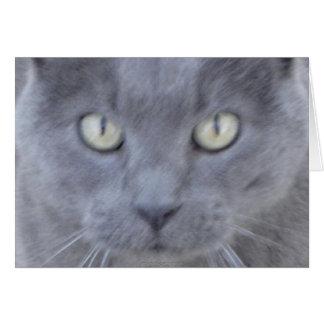 Grey cat face card