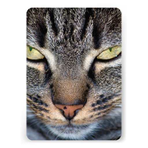 Grey Cat Face Closeup Custom Invites