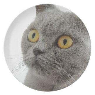 Grey Cat Golden Eyes Close-up Plate