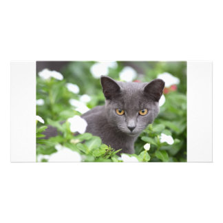 Grey cat in a garden personalized photo card