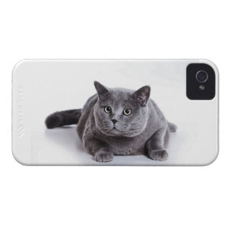 Grey Cat iPhone 4 Case-Mate Case