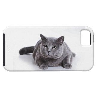Grey Cat iPhone 5 Case