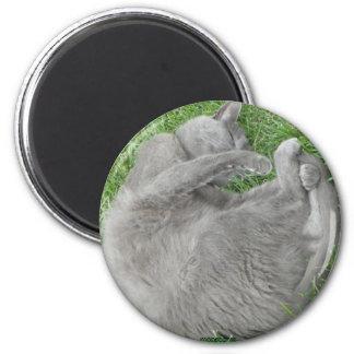 Grey cat nap magnet