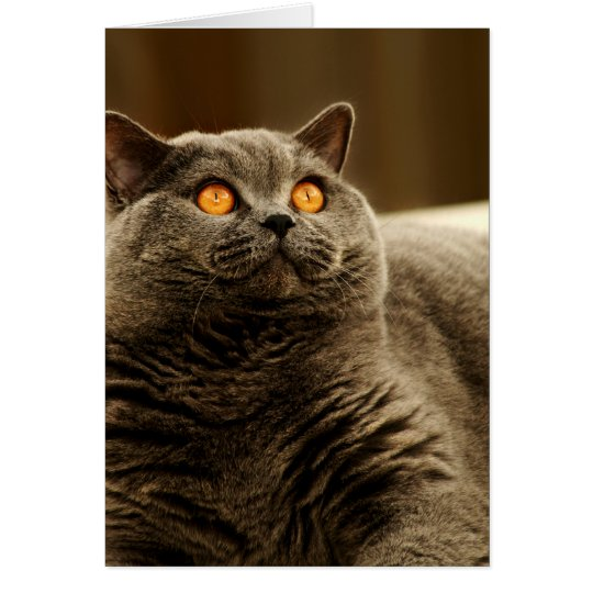 Grey Cat Note Card