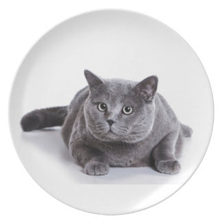 Grey Cat Party Plates