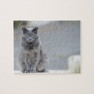 Grey Cat Sitting on a Short Wall Puzzel Puzzles