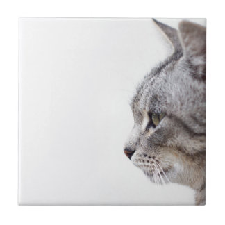 Grey cat small square tile