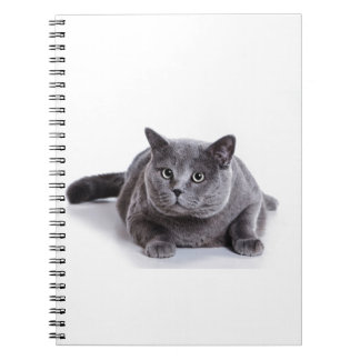 Grey Cat Spiral Notebook