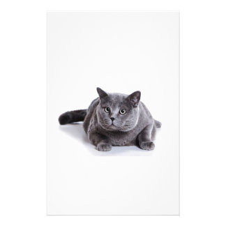 Grey Cat Stationery Design