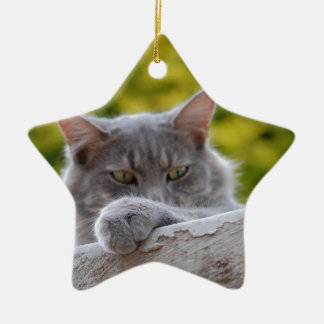 Grey Cats Paw Ceramic Star Decoration