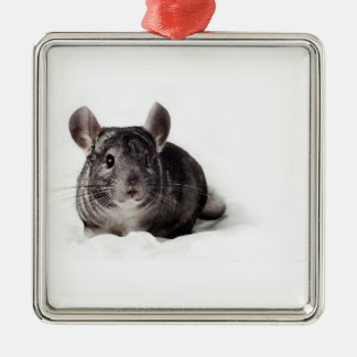 Grey Chinchilla Cute in Blanket Silver-Colored Square Decoration
