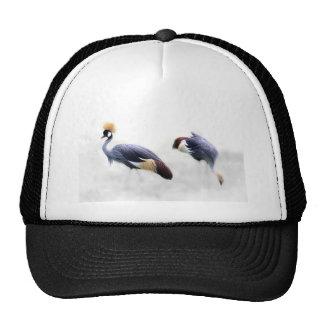 grey-crowned-crane cap