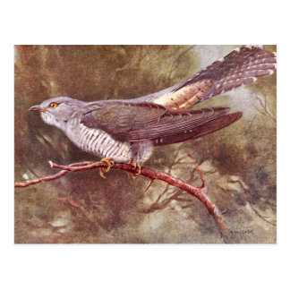 Grey Cuckoo Vintage Illustration Postcard