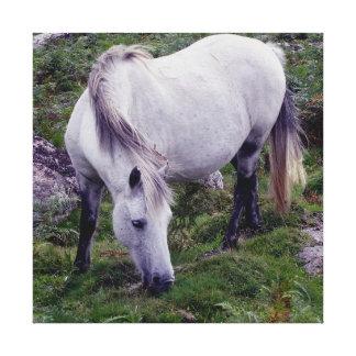 Grey Dartmoor Pony Grazeing In Rocks Autunm Canvas Print