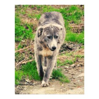 Grey dog full color flyer