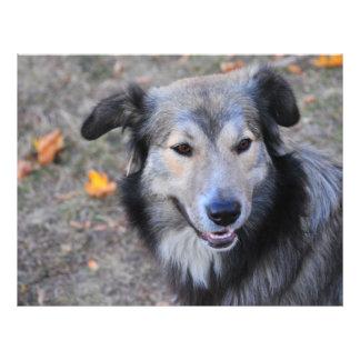 Grey dog flyers