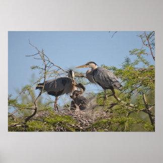 Grey Egret Nest Photo Value Poster Paper