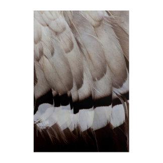 Grey Feather Design Close Up Acrylic Print