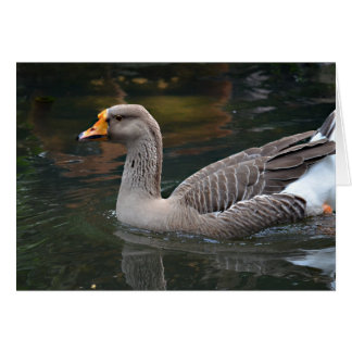 grey goose swimming across bird picture card