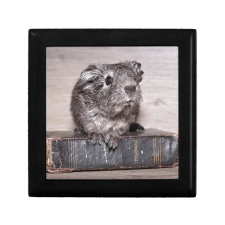Grey Guinea Pig on Book Gift Box