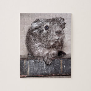 Grey Guinea Pig on Book Jigsaw Puzzle
