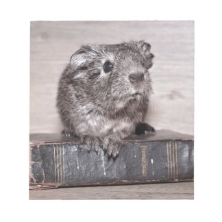 Grey Guinea Pig on Book Notepad