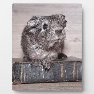 Grey Guinea Pig on Book Plaque