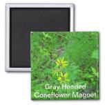 Grey Headed Coneflower Magnet