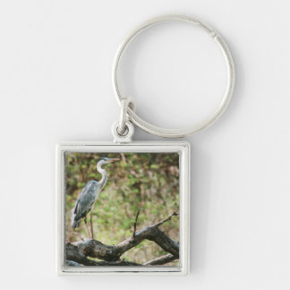 Grey Heron (Ardea Cinerea), South Africa Silver-Colored Square Key Ring