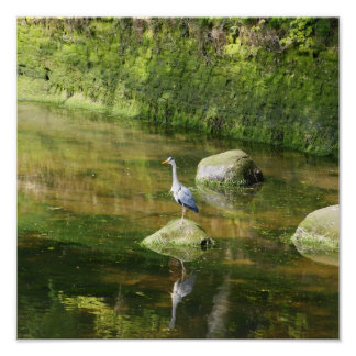 Grey Heron at a River in Warkworth Northumberland Poster