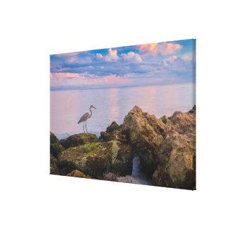Grey Heron at Dusk Canvas Print
