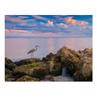 Grey Heron at Dusk Postcard