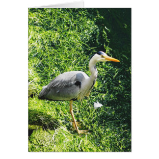 Grey Heron British Birds - warkworth Northumberlan Card