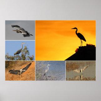 Grey Heron Collage Poster