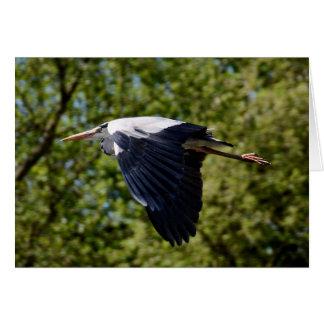 Grey heron flying blank greeting card