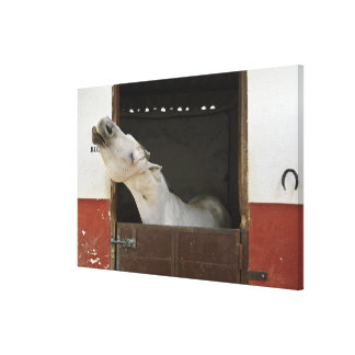 Grey horse in a stable canvas print
