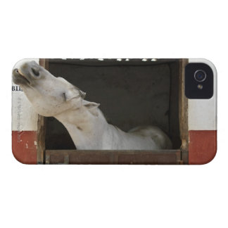 Grey horse in a stable Case-Mate iPhone 4 case