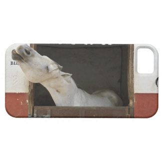 Grey horse in a stable iPhone 5 cover