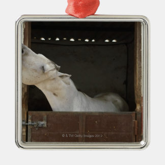 Grey horse in a stable Silver-Colored square decoration