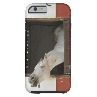 Grey horse in a stable tough iPhone 6 case
