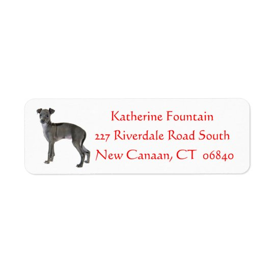 Grey Italian Greyhound Puppy Dog Red