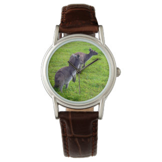 Grey Kangaroos On Green Grass, Watch