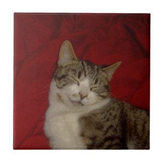 Grey Kitten on Red Tile