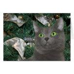 Grey kitty Christmas Greeting Card
