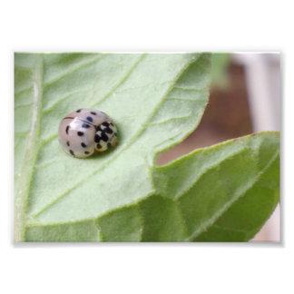 Grey Ladybug Photo Print