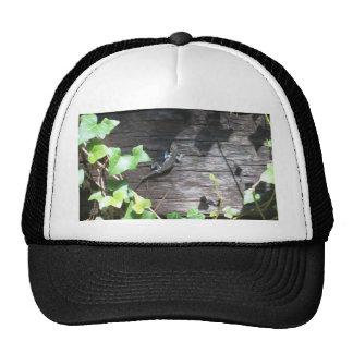 grey lizard on a ivy wall cap