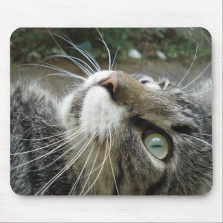 Grey Maine Coon Cat Mouse Mat