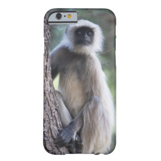 Grey or common or Hanuman langur Barely There iPhone 6 Case