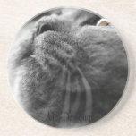 Grey Persian Cat Drink Coaster